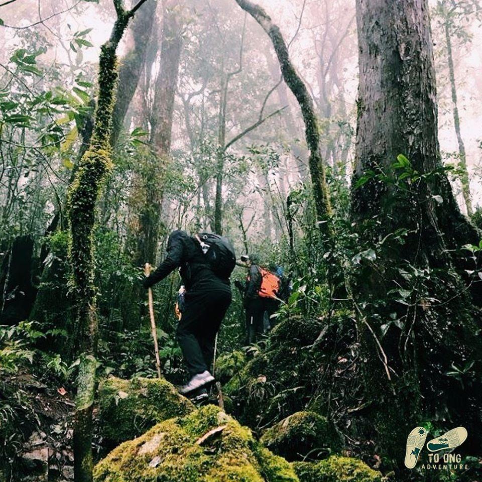 mặc đồ gì đi trekking để bảo vệ đôi chân - giày trekking chuyên dụng