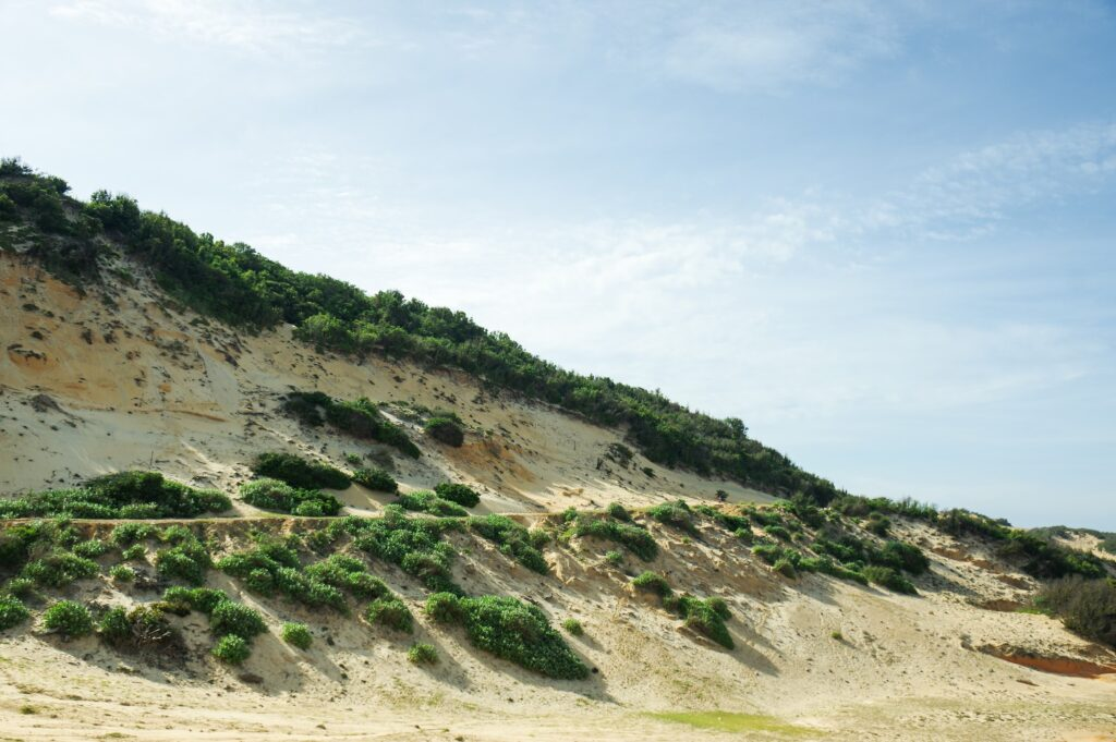 Rừng nguyên sinh chạy dọc theo bờ biển