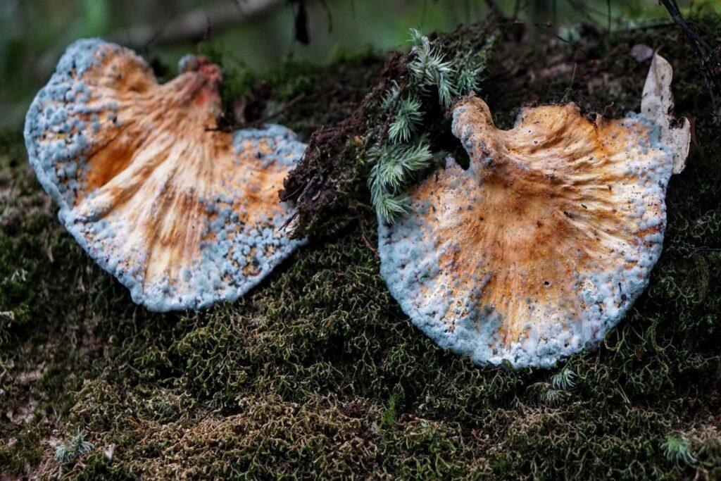 Hệ sinh thái đa dạng chỉ có thể tìm thấy trong rừng