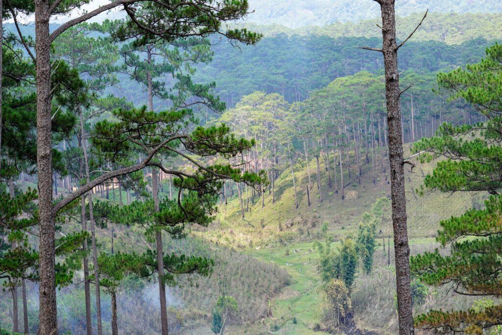 Vẻ đẹp ma mi của vườn quốc gia Bidoup Núi Bà