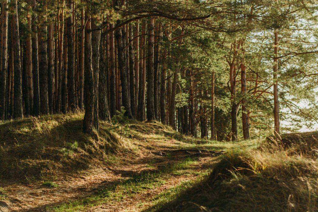 Việc chú ý đến hướng cây mọc cũng giúp bạn rất nhiều trong việc xác định phương hướng